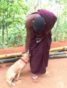 A dog living in a Buddhist Temple (many unwanted female dogs are dumped at Temples) spayed and returned by KACPAW. This is the joy of re-union!
