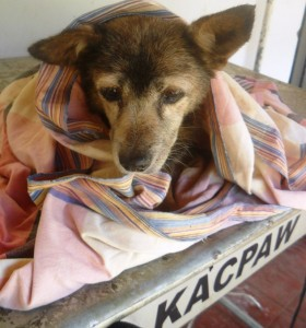 Kacpaw gets help for a sick Community dog