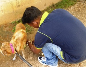 Community dog with a leg injury treated several times on location and cured