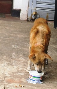 Same dog now. Full coat of fur and leg completely healed.