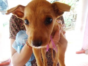 Lipton - Dumped in Hatton at a tea estate - saved and found a home by Gabby, a Canadian Tourist