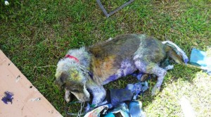 Dog 1a - after treatment